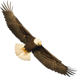 Image of flying eagle, a part of our logo.